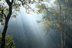 Natura della foresta tailandese Immagine Stock