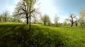 Natura della luce del chiarore del sole di primavera della siluetta degli alberi della molla della depressione di volo video d archivio