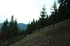 Natura della montagna carpatica fotografia stock libera da diritti