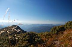 Natura della montagna carpatica immagini stock libere da diritti