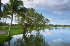 Natura della Repubblica dominicana Fotografie Stock