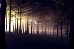 Natura della Siberia fotografia stock libera da diritti