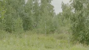 Natura della sorgente Bello paesaggio Sosta con erba verde e gli alberi Fondo tranquillo Bello nel verde di foresta Fotografia Stock