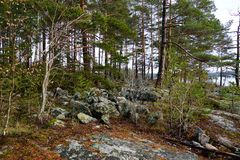 Natura della Svezia fotografie stock