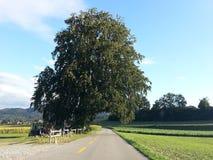 Natura 2013 2014 della Svizzera Fotografia Stock