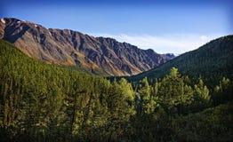 Natura delle montagne di Altai Fotografia Stock