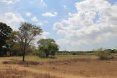 Natura dello Sri Lanka immagine stock