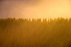 Natura dettagliatamente, minimalismo e spazio, linee e semplicità Fotografie Stock Libere da Diritti