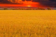Natura di agricoltura del paesaggio di giallo tramonto del campo Fotografie Stock Libere da Diritti