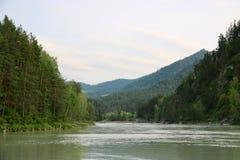 Natura di Altai: Fiume di Katun Fotografie Stock Libere da Diritti
