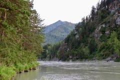Natura di Altai: montagne e fiume Immagine Stock
