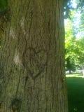 Natura di amore dell'albero immagini stock libere da diritti