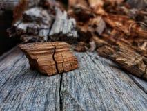 Natura di autunno Fotografia Stock