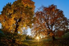 Natura di autunno al tramonto immagini stock libere da diritti