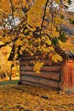 Natura di autunno ed architettura del parco di Kolomenskoye a Mosca immagine stock libera da diritti
