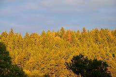Natura di autunno Il sole della foresta splende nuvoloso Fotografie Stock Libere da Diritti