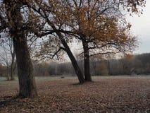 Natura di autunno, quando comincia ottenere il freddo Fotografie Stock