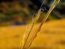 Natura di autunno in Russia fotografia stock