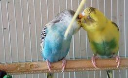 Natura di bacio fotografie stock libere da diritti