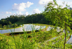 Natura di Balinese fotografia stock libera da diritti