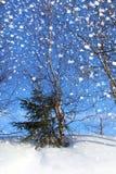 Natura di inverno, Fotografie Stock