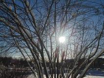 Natura di inverno Fotografia Stock Libera da Diritti