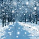 Natura di inverno, caduta della neve Fotografia Stock