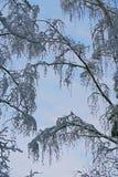 Natura di inverno la prima neve nella foresta Immagini Stock
