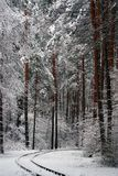 Natura di inverno la prima neve nella foresta Immagine Stock