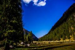 Natura di Kirgiz di zona di Kol dell'ala Immagini Stock Libere da Diritti