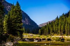 Natura di Kirgiz di zona di Kol dell'ala Fotografie Stock