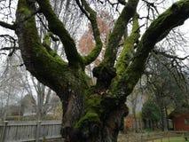 Natura di legno di moos di baum dell'albero immagine stock libera da diritti