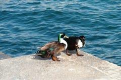 Natura di Malta, mar Mediterraneo Immagine Stock Libera da Diritti