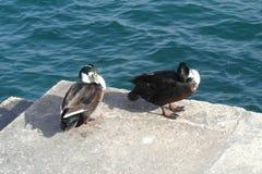 Natura di Malta, mar Mediterraneo Fotografia Stock Libera da Diritti