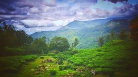 Natura di Munnar Fotografia Stock