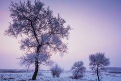 Natura di paesaggio Immagini Stock