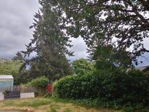 Natura di Tacoma fotografia stock