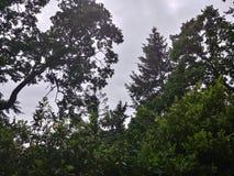 Natura di Tacoma fotografie stock