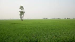 Natura di vista in Tailandia stock footage