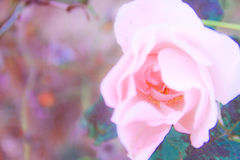 Natura di vita del fiore Fotografie Stock