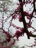 Natura, drzewo, kwiaty, menchie, okwitnięcie fotografia royalty free