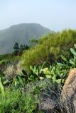 Natura e flora di Tenerife Immagini Stock