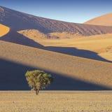Natura e paesaggi della Namibia fotografia stock