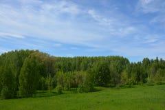 Natura ed alberi piacevoli vicino a Rybinsk immagini stock libere da diritti