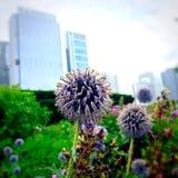 Natura ed architettura Immagine Stock