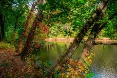 Natura Europe Ukraine zdjęcie royalty free