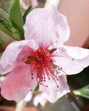 Natura in fiore Royalty-vrije Stock Foto's