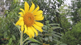 Natura, fiore, estate stock footage