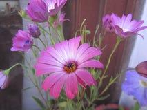Natura, fiori e piante Immagini Stock Libere da Diritti