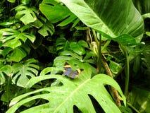 Natura & fjäril Arkivbild